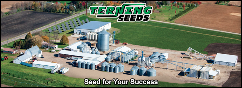 Terning Seeds